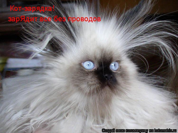 Котоматрица: Кот-зарядка! зарЯдит все без проводов