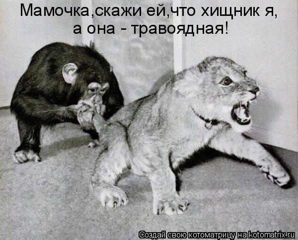 Котоматрица: Мамочка,скажи ей,что хищник я, а она - травоядная!