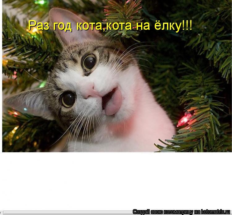 Котоматрица: Раз год кота,кота на ёлку!!!