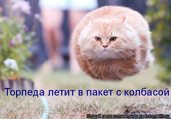 Котоматрица: Торпеда летит в пакет с колбасой!!!