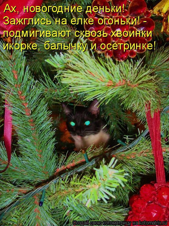 Котоматрица: Ах, новогодние деньки!  Зажглись на елке огоньки! - подмигивают сквозь хвоинки икорке, балычку и осетринке!