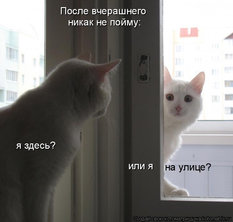 Котоматрица: После вчерашнего никак не пойму: я здесь? или я на улице?
