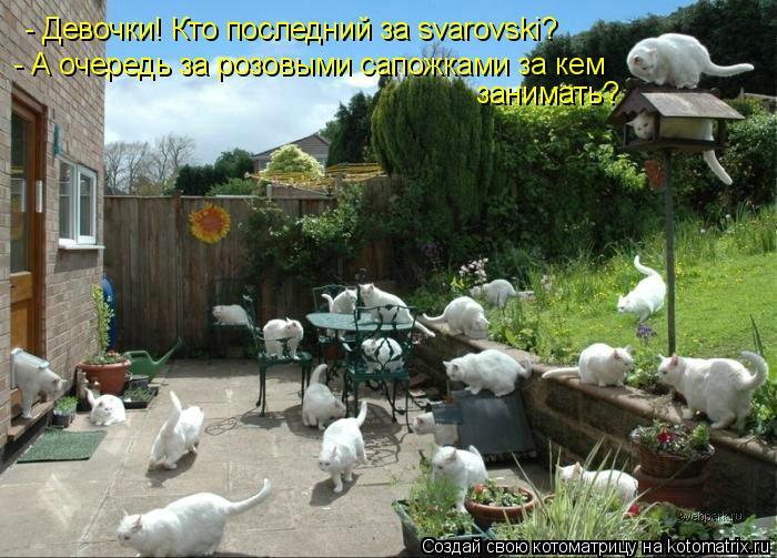 Котоматрица: - Девочки! Кто последний за svarovski? - А очередь за розовыми сапожками за кем  занимать?