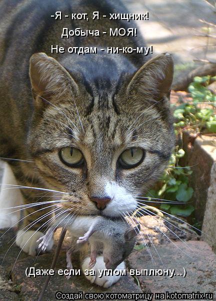 Котоматрица: -Я - кот, Я - хищник! Добыча - МОЯ! Не отдам - ни-ко-му! (Даже если за углом выплюну...)