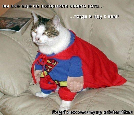 Котоматрица: вы всё ещё не покормили своего кота...  ...тогда я иду к вам!