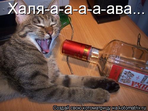 Котоматрица: Халя-а-а-а-а-ава...