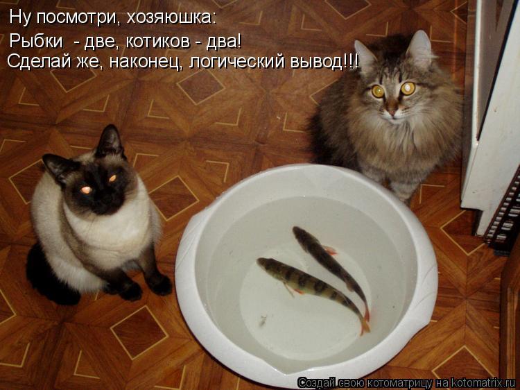 Котоматрица: Ну посмотри, хозяюшка: Рыбки  - две, котиков - два! Сделай же, наконец, логический вывод!!!