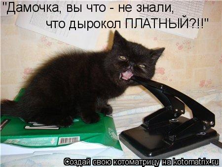 """Котоматрица: """"Дамочка, вы что - не знали, что дырокол ПЛАТНЫЙ?!!"""""""