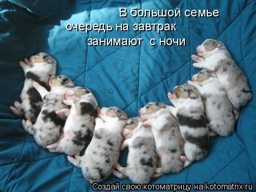 В большой семье  очередь на завтрак  занимают  с ночи