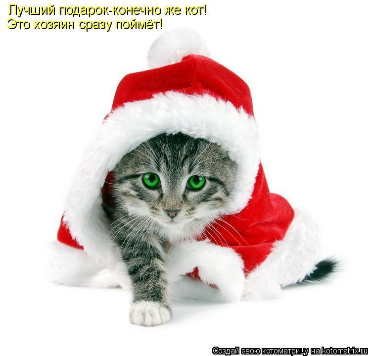 Котоматрица: Лучший подарок-конечно же кот! Это хозяин сразу поймёт!