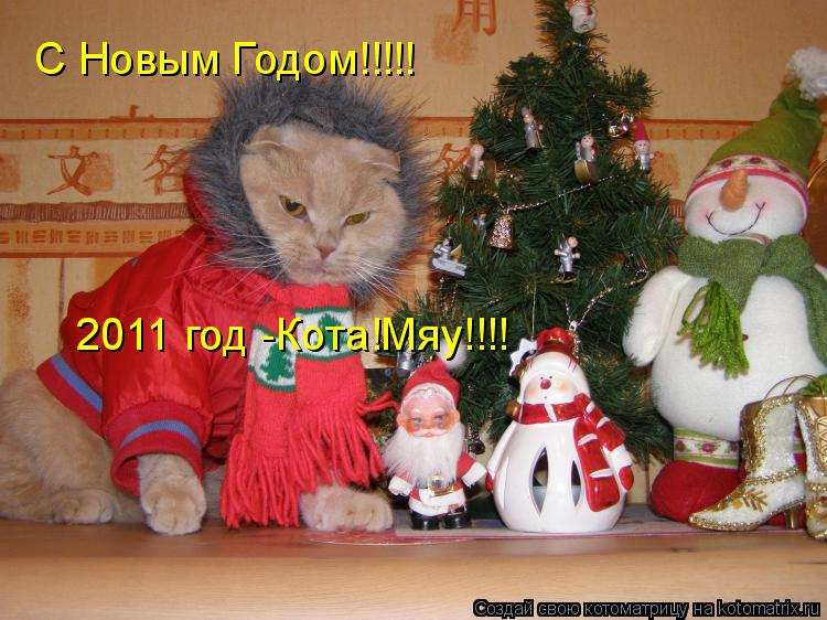 Котоматрица: С Новым Годом!!!!!   2011 год -Кота!Мяу!!!!