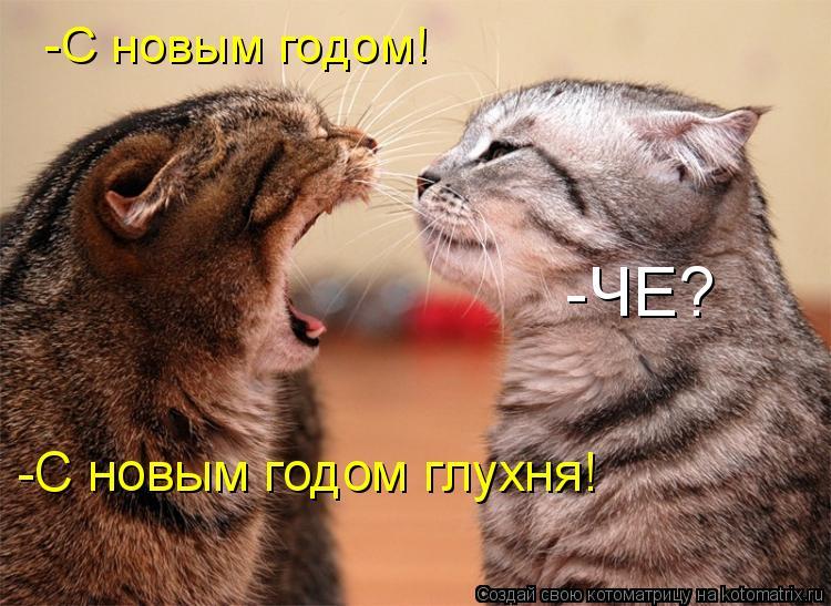 Котоматрица: -C новым годом! -ЧЕ? -С новым годом глухня!
