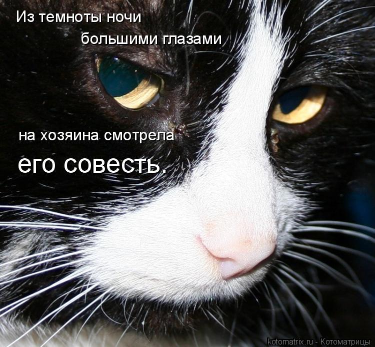 Котоматрица: Из темноты ночи большими глазами на хозяина смотрела его совесть.
