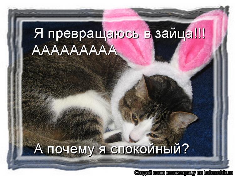 Котоматрица: Я превращаюсь в зайца!!! ААААААААА А почему я спокойный?