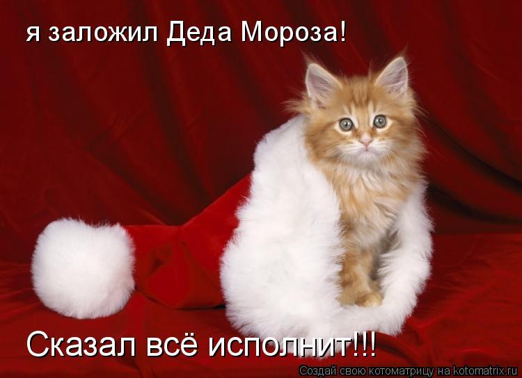 Котоматрица: я заложил Деда Мороза! Сказал всё исполнит!!!