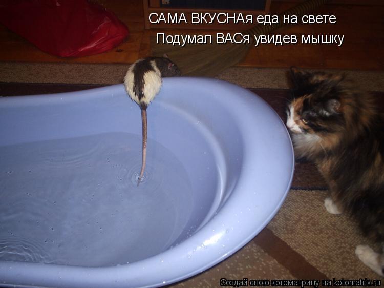 Котоматрица: САМА ВКУСНАя еда на свете Подумал ВАСя увидев мышку