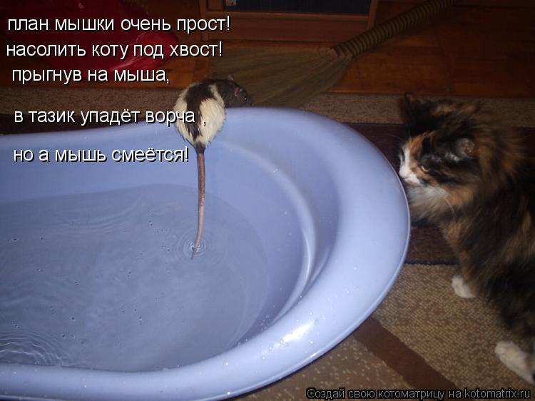 Котоматрица: план мышки очень прост! насолить коту под хвост! прыгнув на мыша, в тазик упадёт ворча , но а мышь смеётся!
