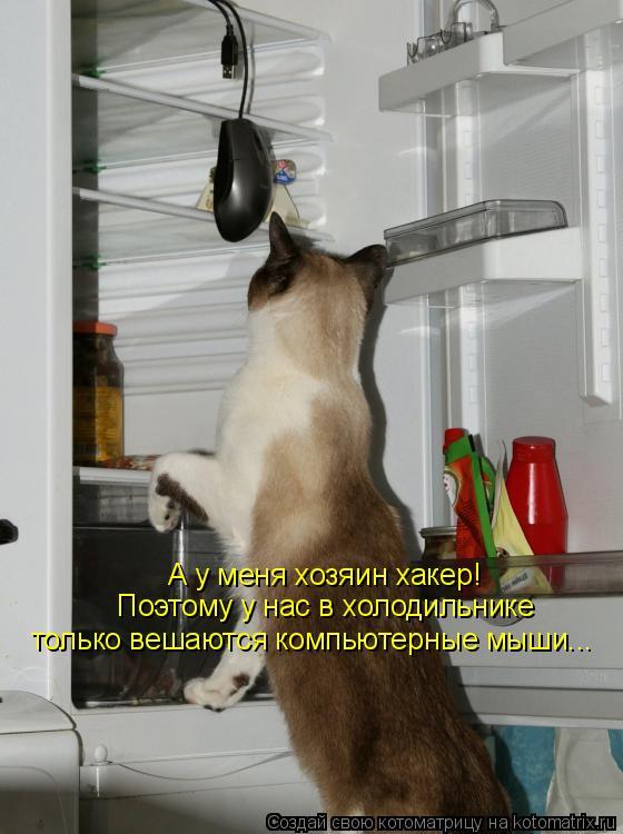 Котоматрица: А у меня хозяин хакер!  Поэтому у нас в холодильнике  только вешаются компьютерные мыши...