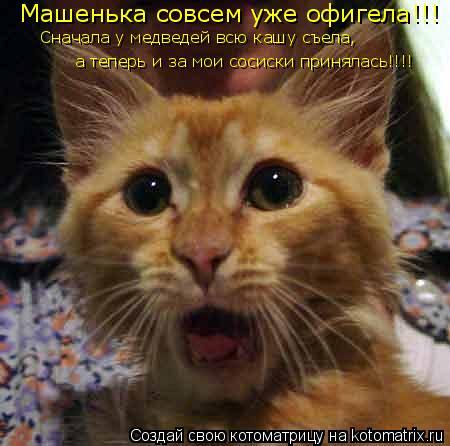 Котоматрица: а теперь и за мои сосиски принялась!!!! Сначала у медведей всю кашу съела,  Машенька совсем уже офигела!!!
