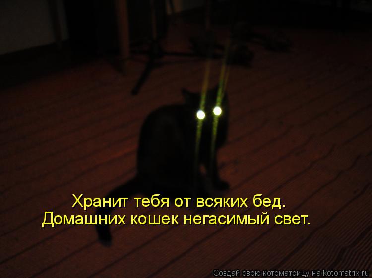 Котоматрица: Домашних кошек негасимый свет. Хранит тебя от всяких бед.