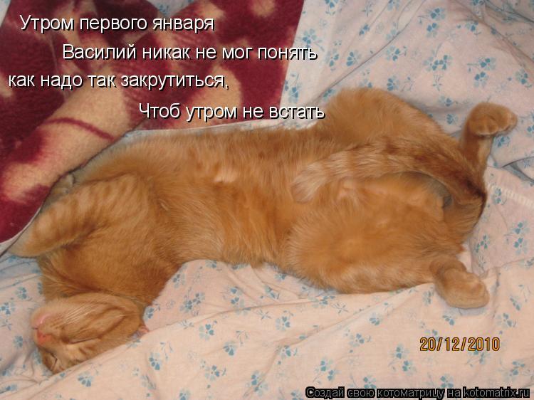 Котоматрица: Утром первого января  Василий никак не мог понять как надо так закрутиться,  Чтоб утром не встать