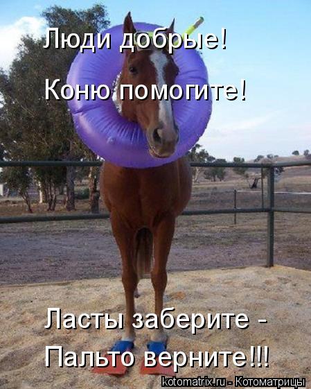 Котоматрица: Люди добрые! Пальто верните!!! Коню помогите! Ласты заберите -