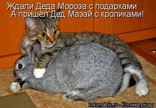 Котоматрица: Ждали Деда Мороза с подарками А пришёл Дед Мазай с кроликами!