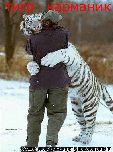 Котоматрица: тигр карманик
