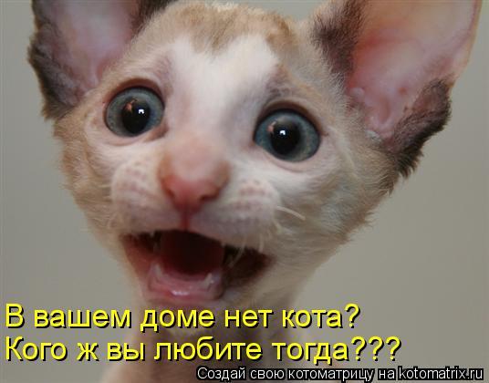 В вашем доме нет кота? Кого ж вы любите тогда???