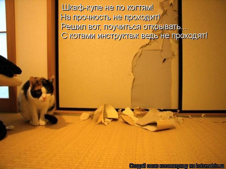 был, котенок хочет в коридор дома Ломоносов