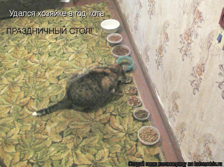 Котоматрица: Удался хозяйке в год кота ПРАЗДНИЧНЫЙ СТОЛ!