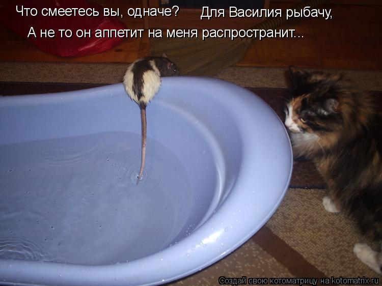 Котоматрица: Что смеетесь вы, одначе? Для Василия рыбачу, А не то он аппетит на меня распространит...