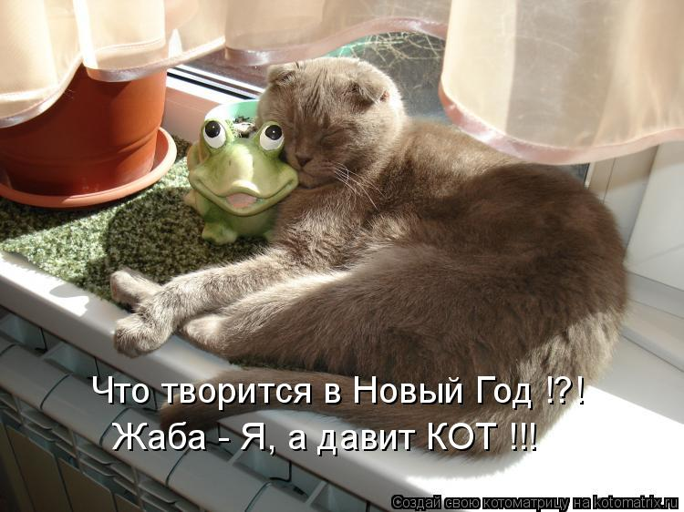 Котоматрица: Жаба - Я, а давит КОТ !!! Что творится в Новый Год !?!