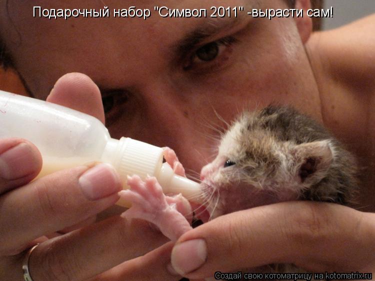 """Котоматрица: Подарочный набор """"Символ 2011"""" -вырасти сам!"""