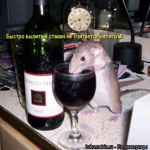 Котоматрица: Быстро выпитый стакан не считается налитым!
