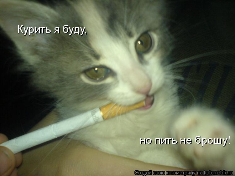 Котоматрица: Курить я буду, но пить не брошу!