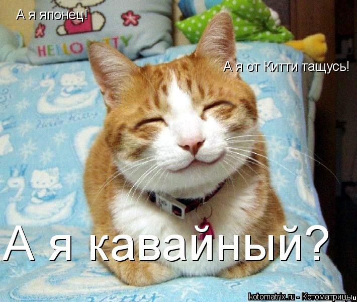 Котоматрица: А я японец! А я от Китти тащусь! А я кавайный?