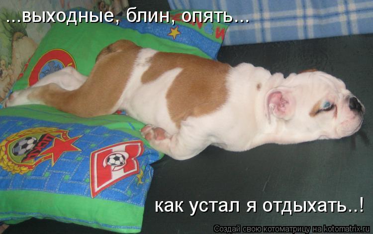 Котоматрица: ...выходные, блин, опять... как устал я отдыхать..!