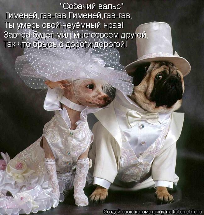 """Котоматрица: """"Собачий вальс"""" Гименей,гав-гав,Гименей,гав-гав, Ты умерь свой неуёмный нрав! Так что брысь с дороги,дорогой! Завтра будет мил мне совсем друг"""