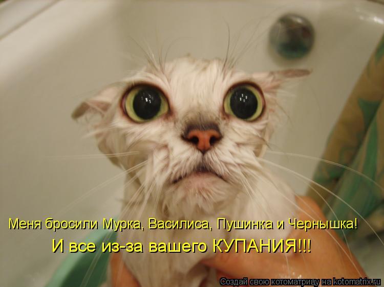 Котоматрица: Меня бросили Мурка, Василиса, Пушинка и Чернышка! И все из-за вашего КУПАНИЯ!!!