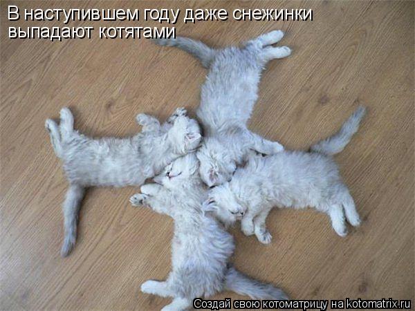 В наступившем году даже снежинки  выпадают котятами