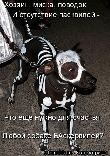 Котоматрица: Хозяин, миска, поводок И отсутствие пасквилей -  Что еще нужно для счастья Любой собаке БАскервилей?