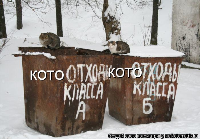 Котоматрица: кото кото