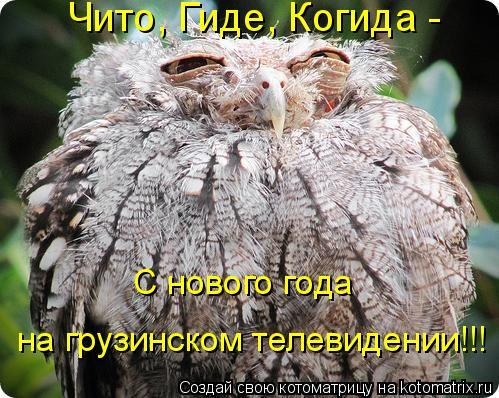 Котоматрица: С нового года  на грузинском телевидении!!! Чито, Гиде, Когида -