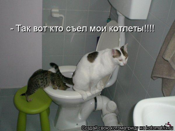 Котоматрица: - Так вот кто съел мои котлеты!!!!