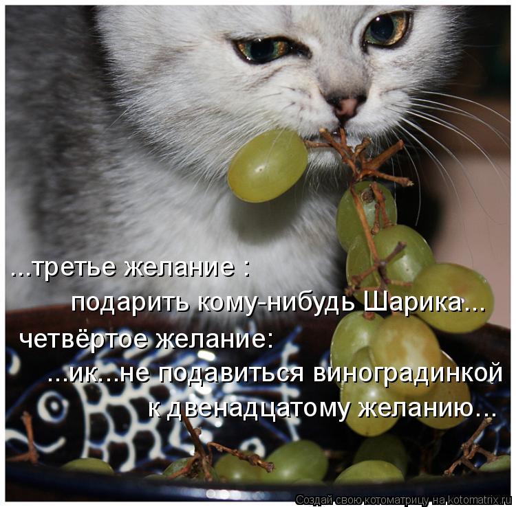 Котоматрица: подарить кому-нибудь Шарика... ...третье желание :  четвёртое желание:  ...ик...не подавиться виноградинкой  к двенадцатому желанию...