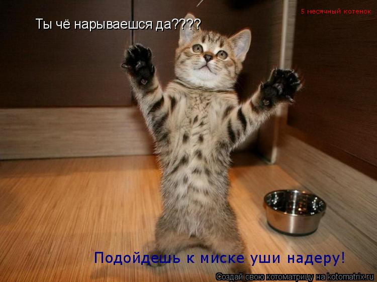 кошка ловит ноги