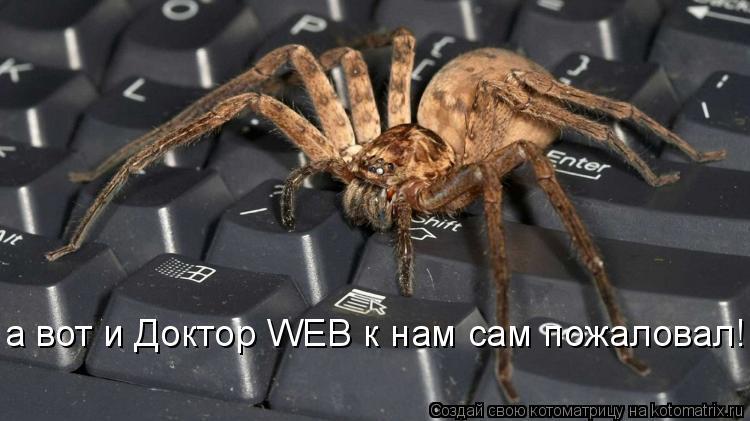 Котоматрица: а вот и Доктор WEB к нам сам пожаловал!