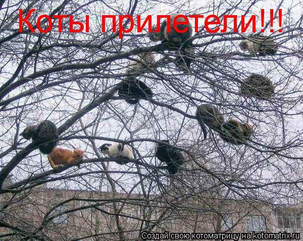 Котоматрица: Коты прилетели!!!
