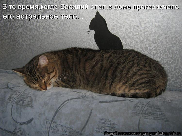 Котоматрица: В то время,когда Василий спал,в доме проказничало  его астральное тело...